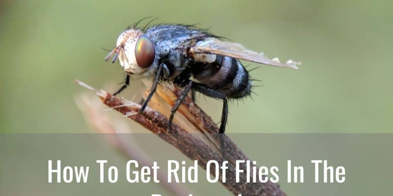 How To Get Rid Of Flies In The Backyard